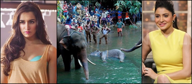 Bollywood Reacts Death of Pregnant Elephant in Kerala due to Cracker-Stuffed Fruit